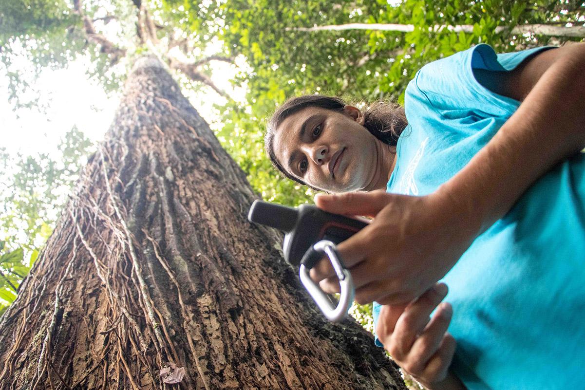 Pesquisadores estudam influência humana na paisagem da Floresta Amazônica