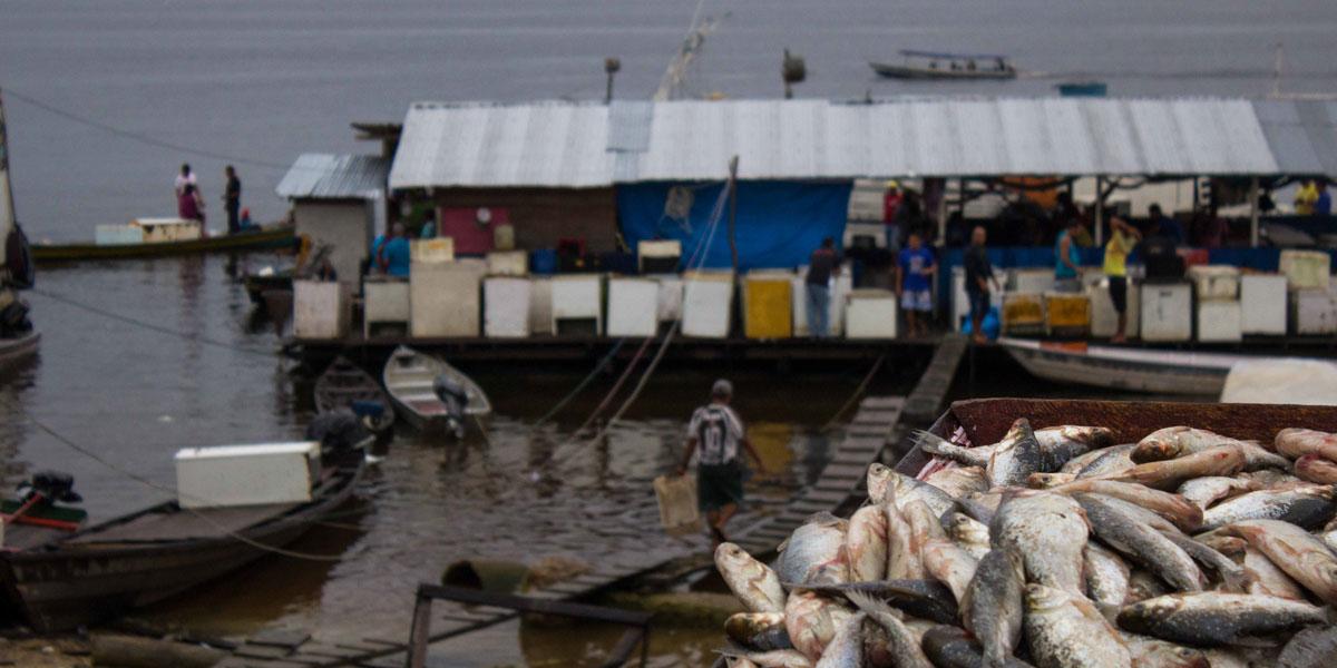 Cerca de 900 mil kg de peixe passaram por portos centrais do Amazonas na primeira metade de 2019