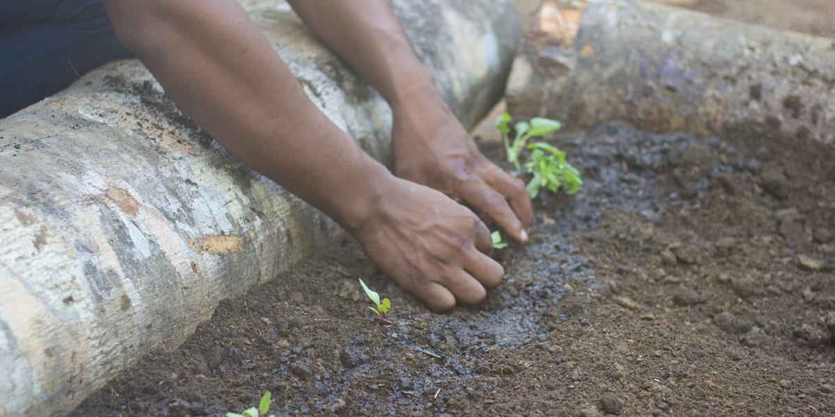 Jovens ribeirinhos aprendem técnicas de produção agrícola e animal em dia de campo