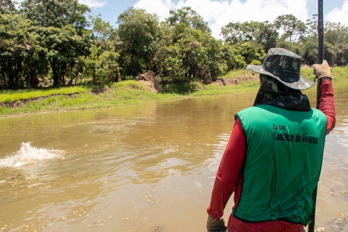 Instituto Mamirauá realiza certificação de contadores de pirarucu