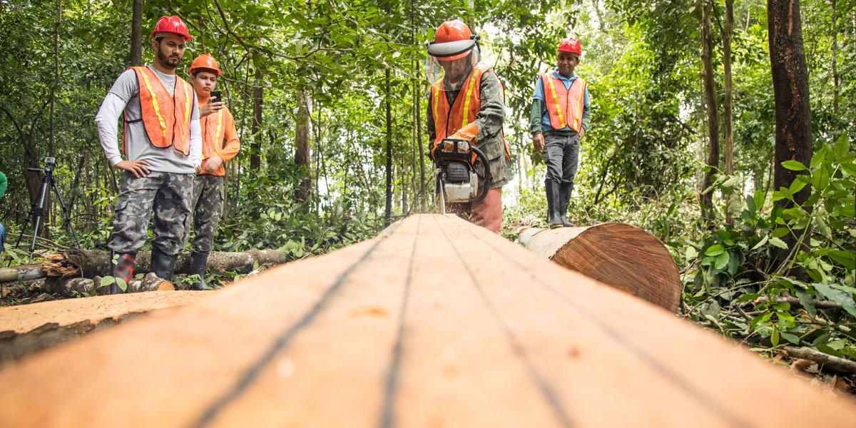 Encontro de Manejadores Florestais debate aproveitamento da madeira para comercialização