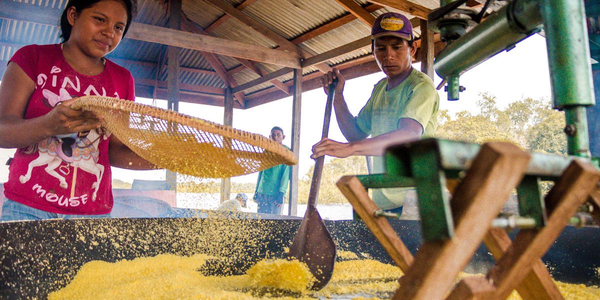 Cartilha orienta comunidades rurais para boas práticas de produção de farinha