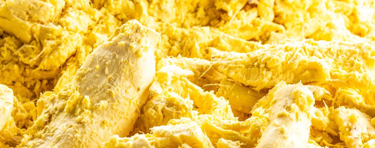 Instituto Mamirauá desenvolve tecnologias para melhorar produção de farinha de mandioca no Amazonas
