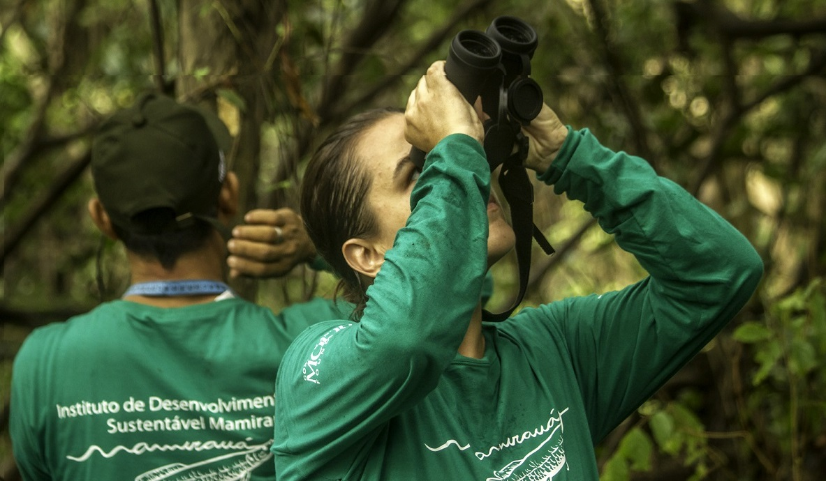 Instituto Mamirauá abre inscrições para nove bolsas de pesquisa na Amazônia